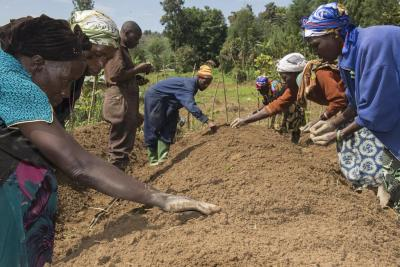 Higher quality seeds can help beat Africa's 'hunger pandemic'