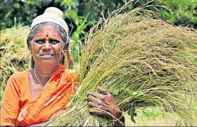 Hyderabad-based 'Millet Bank' empowering women farmers