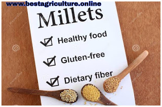 How much benefits of Millets for your healthy life