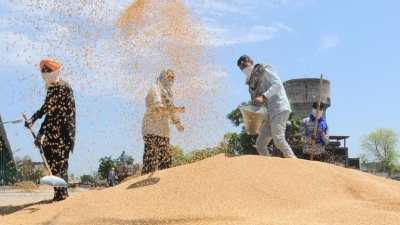 Study shows millets can reduce risk of developing cardiovascular diseases