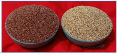 Now, white ragi gives nutritious food a makeover
