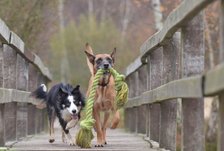 Autumn DIY Projects for Dogs