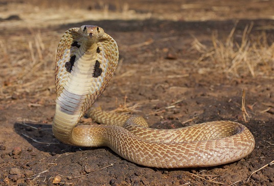 snake control kolkata