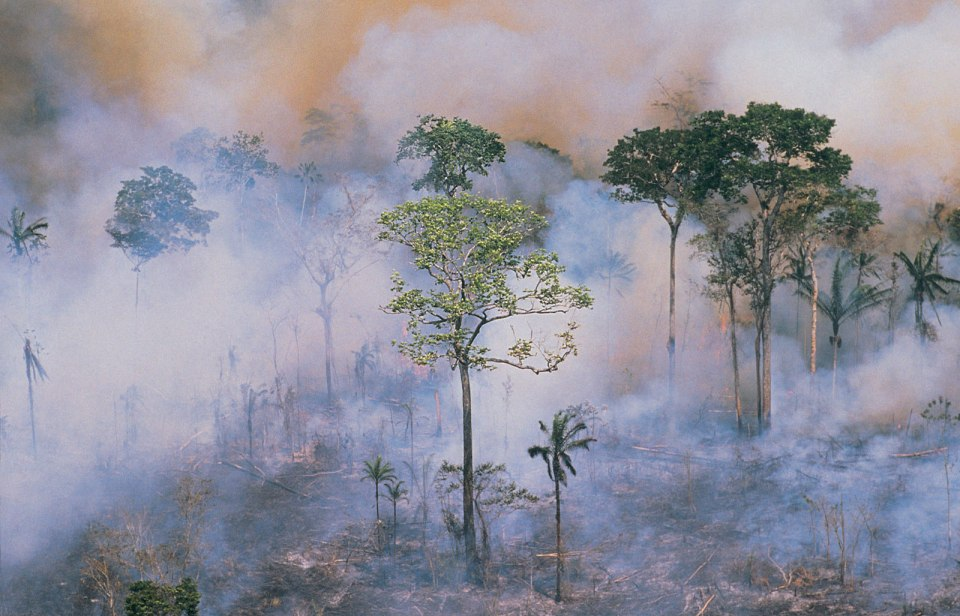 Emissions emitted from destruction of tropical forests largely underestimated