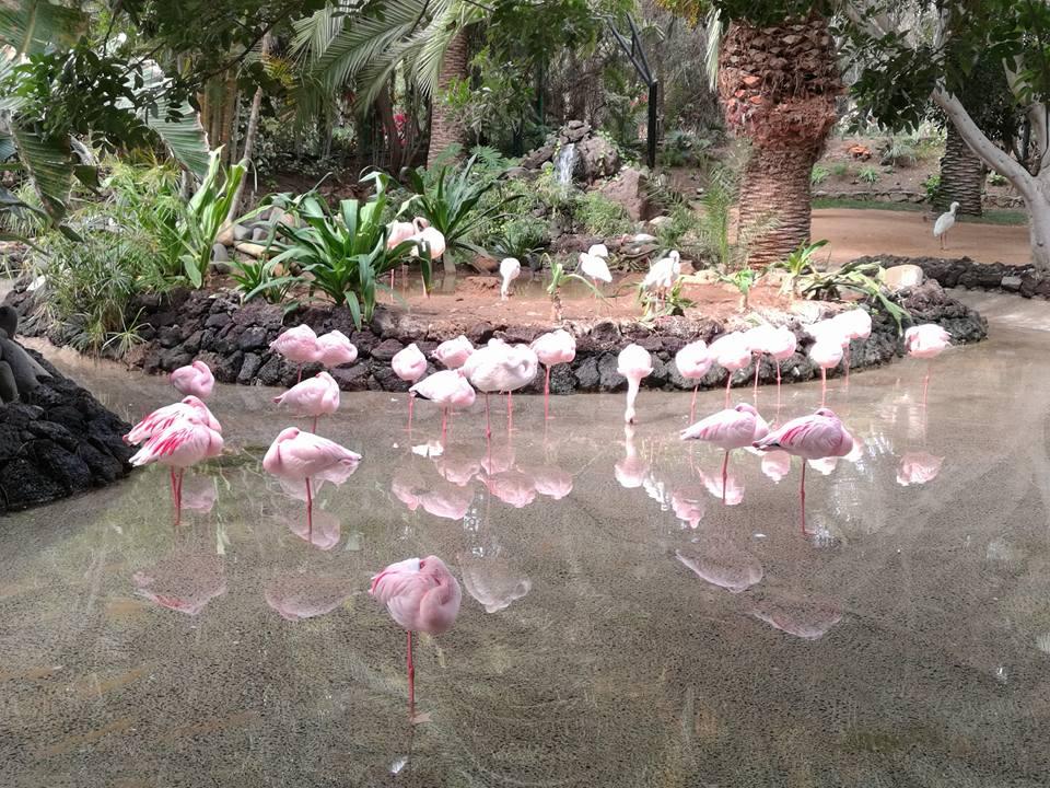 Oasis Park in La Lajita