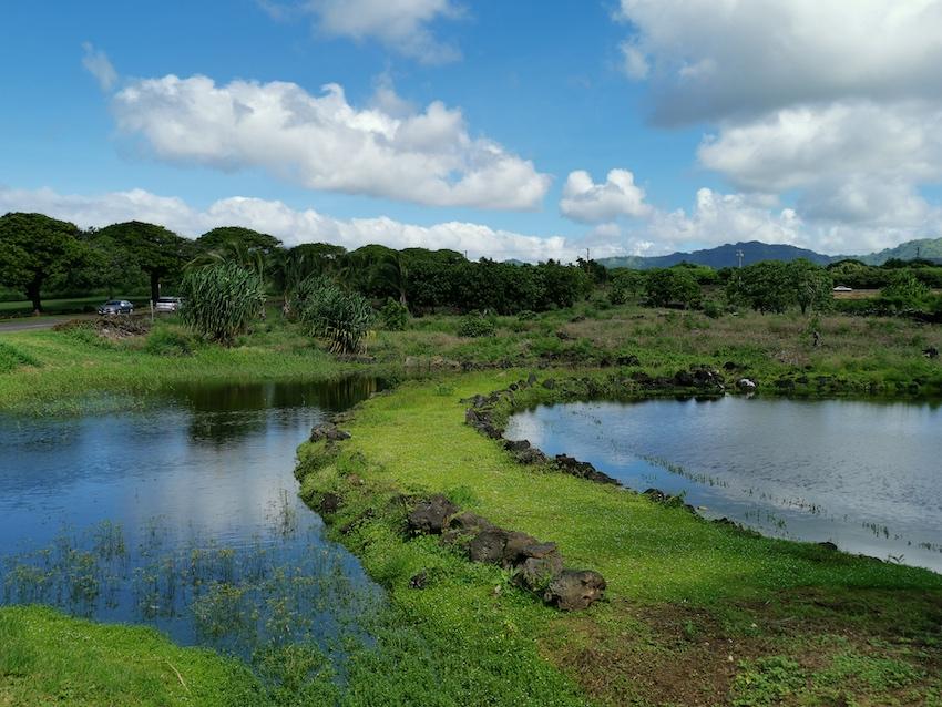 Landschaft im Süden von Kauai (Foto: SmartPhoneFan.de)