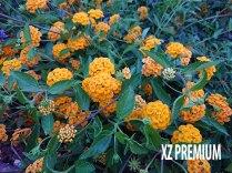 Xperia-XZ-Premium-Test-kamere-(31)