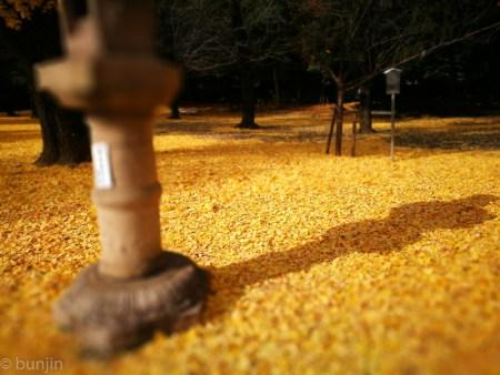 黄金色の影