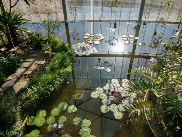 A Greenhouse Pond