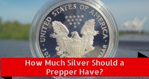 how much silver should a prepper have
