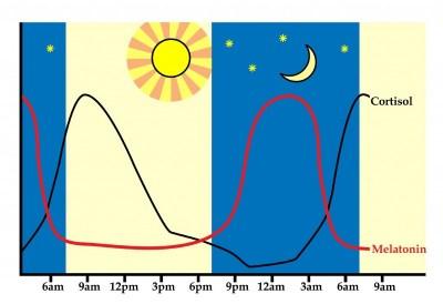 Evolución de los niveles de cortisol y melatonina acorde a los ciclos de vigilia y sueño.