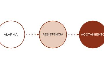 Las tres etapas del estrés y cómo cambiar la dieta para afrontarlo