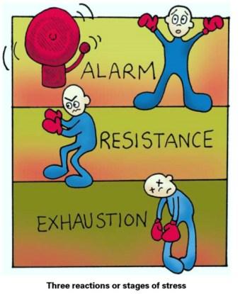 3 etapas del estrés