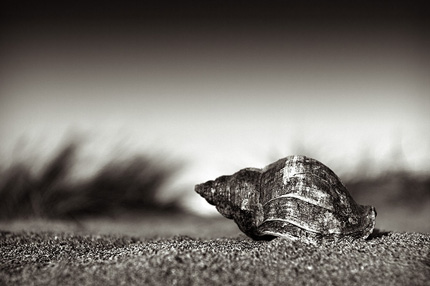 Photo by David Nightingale