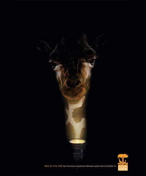San Fransisco Zoo: Giraffe