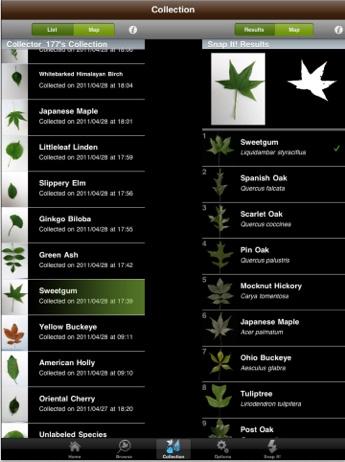 leafsnap05