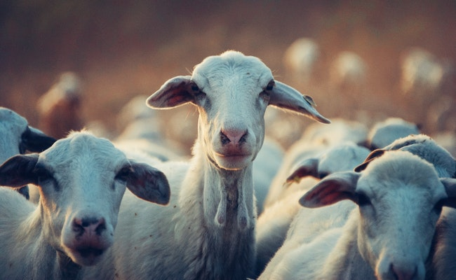 7 Steps To Starting A Livestock Farm