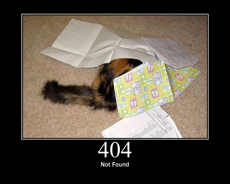 404 - Katzencontent
