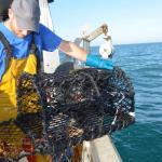 Les cantonnements : protéger les ressources marines