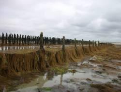 Barrage à Sargasses (C. Michel/SMEL)