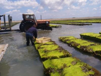 Ramassage expérimental à Gouville sur Mer (@SMEL)