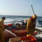 Vers une certification « Pêche durable » du bulot de la Baie de Granville