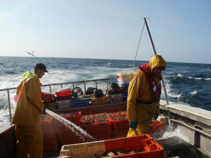 retour de pêche aux bulots (@SMEL)