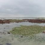 La pêche à pied attentive à l'environnement