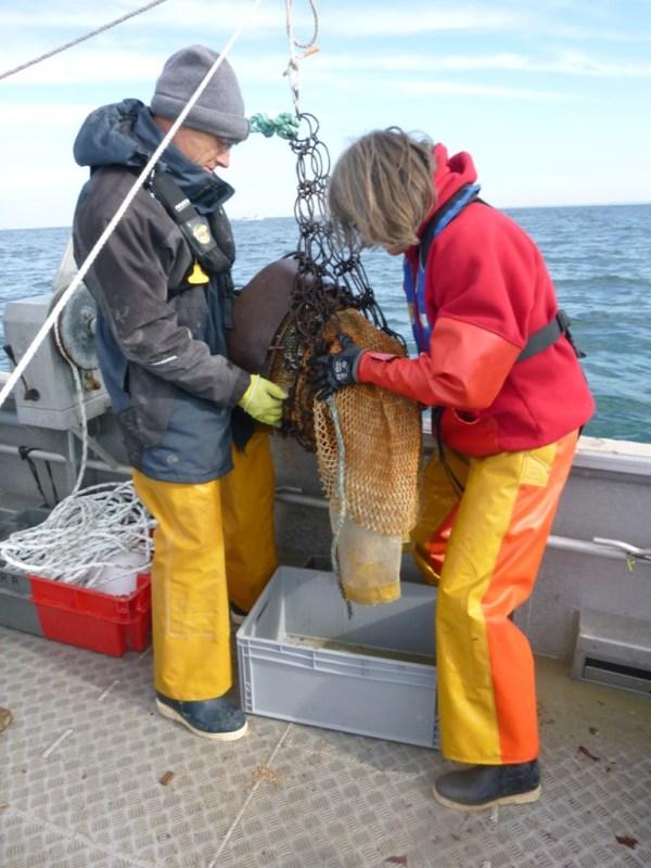 Agents du SMEL pendant la pêche expérimentale de bulots.