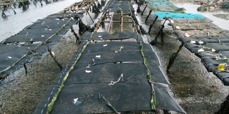 Les poches de l'expérimentation installées sur la concession de Blainville Sur Mer (@SMEL)