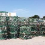 Pêcherie de Céphalopodes : gérer la ressource et valoriser la production.
