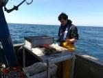 Comparaison de deux casiers sur le rendement de pêche du bulot.