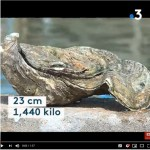 Une huître géante en Vendée, une autre au SMEL.