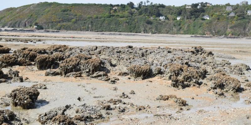 Récif très dégradé de Champeaux en 2019 (@SMEL)