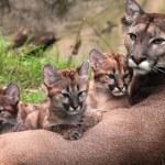 Kitten mom Puma 8Y3A9715