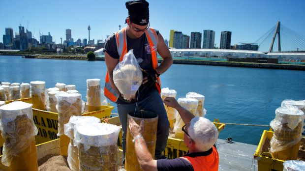 Big bangs: Mortars being prepared on barges at White Bay ahead of New Year's Eve fireworks celebrations.