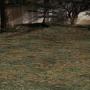 Lighted Forest – Battle Background – Smile Game Builder
