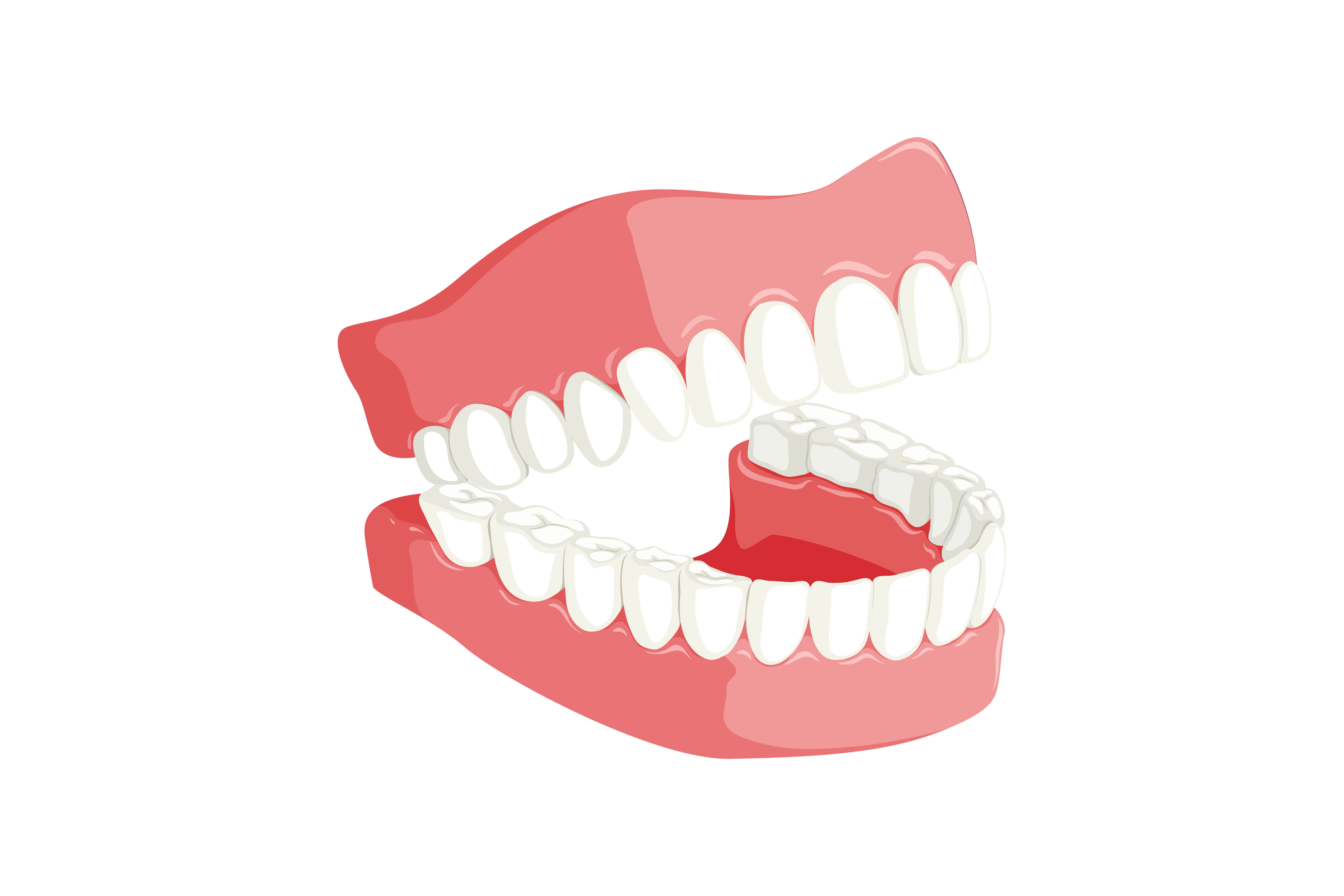 Four Different Types Of Teeth And Their Function