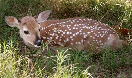 16. Dewey the Deer