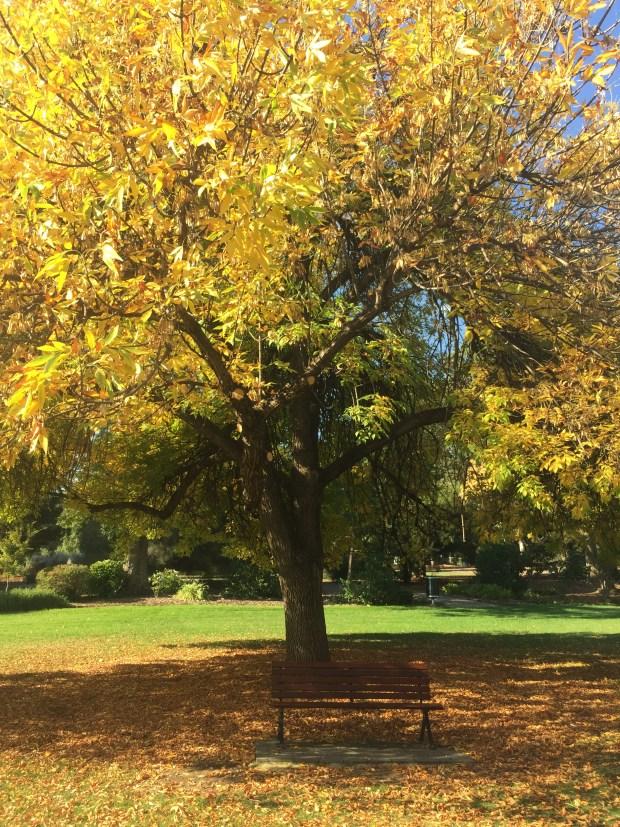Botanic Gardens, Wagga Wagga