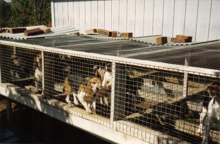 Tucson Animal Welfare Legislation