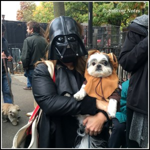 dogs-parade