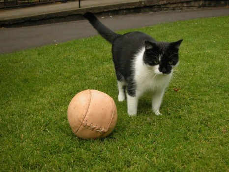 Museum cat Oswald and the replica world's oldest football