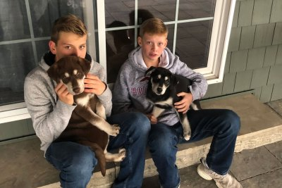 Boys holding their farm dogs