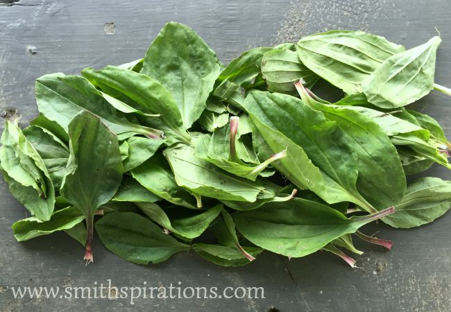 plantain leaves piled
