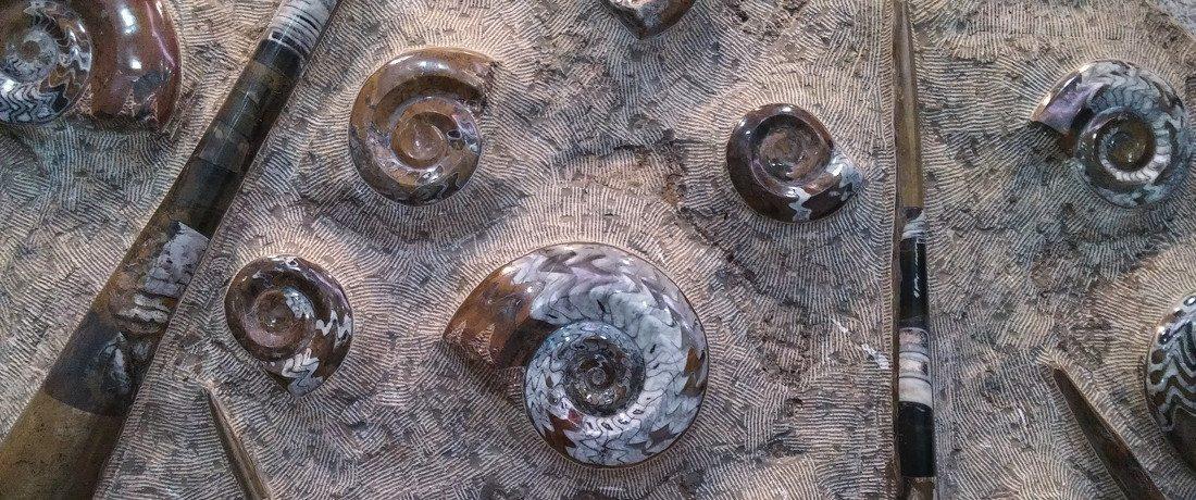Fossil shells at Seodaemun museum Seoul Korea