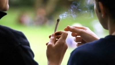 consumo maconha entre adultos eua dobra smoke buddies Literatura Sativa: Cada Um Na Sua