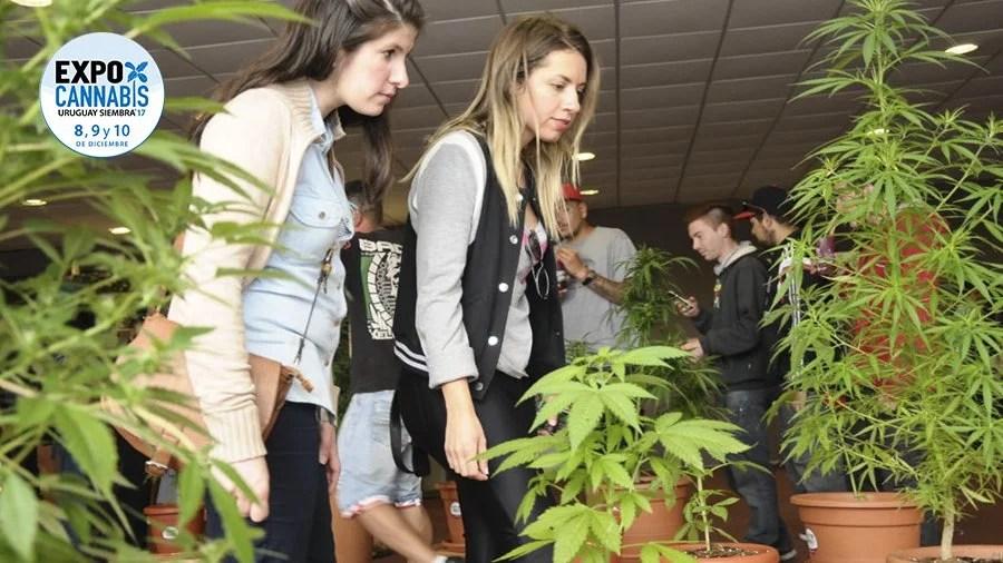 EXPOCANNABIs Vem aí o principal evento de maconha do Uruguai EXPOCANNABIS: Vem aí o principal evento de cannabis do Uruguai