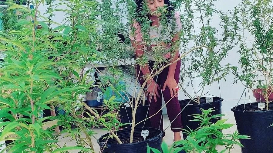 mulher plantas Mães se unem por tratamento com a cannabis no Cariri cearense