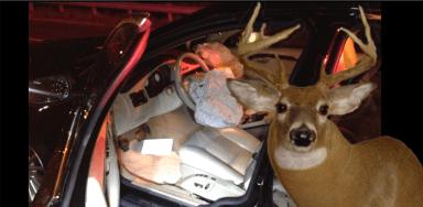 deer accident slider